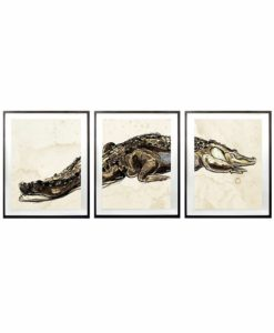 Natural-Curiosities-Alligator-Triptych-1