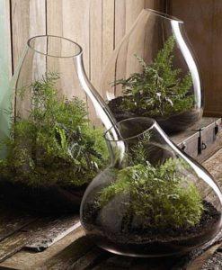 roost-terrariums
